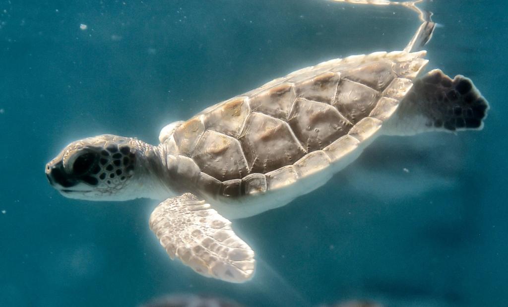 Les tortues de mer                arrivent !