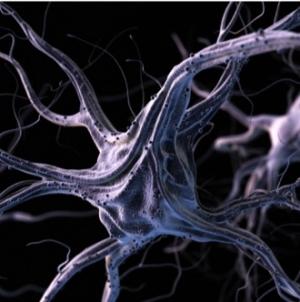 Cérébral, visuel ou kinesthésique ?