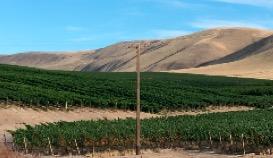 Des vins du Far West