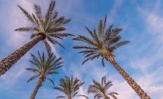 8 JUILLET 2020: FLORIDE: PROMESSES EN L'AIR