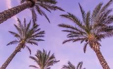 LE PRÉSIDENT DONALD TRUMP, NOUVEAU RÉSIDENT PERMANENT DE FLORIDE, A TENU UN RASSEMLEMENT LE 26 NOVEMBRE 2019 AU BB&T CENTER