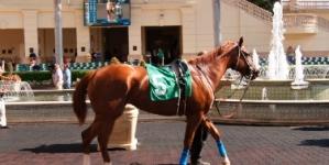 <strong></noscript>Les chevaux sont de retour au Gulfstream Park pour la première course de championnat 2019-2020 ! </strong>