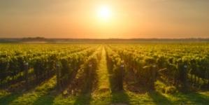 Cap sur l'Italie et les vins d'Émilie-Romagne