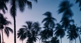 BIEN SE RENSEIGNER SUR LES TYPES DE PARCS DE MAISONS MOBILES EN FLORIDE AVANT D'ACHETER !