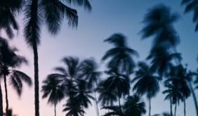 14 MAI 2020 : LA FLORIDE SE RÉVEILLE