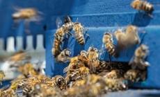 BEE HAPPY !